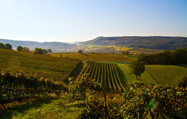 Weingüter und Schlösser stehen hoch im Kurs