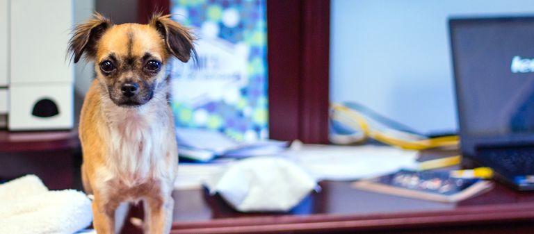 Authentische Einblicke in den Berufsalltag helfen beim Imageaufbau per Video. Dazu kann auch ein Clip vom Bürohund zählen.