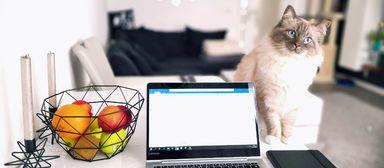 Katze am Schreibtisch: ein Siegermotiv beim internen Fotowettbewerb der HIH-Gruppe.