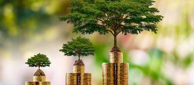 Management, das der Umwelt gut tut, wird mit Geld belohnt.